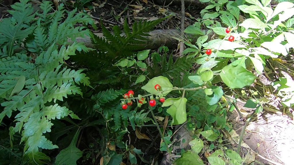 flora de parque bicentenario