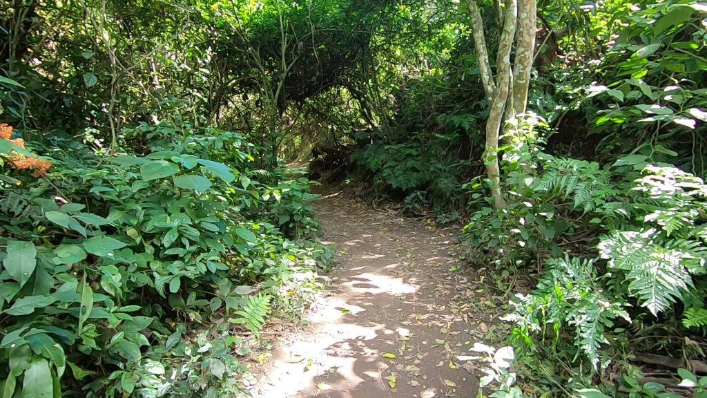 senderos dentro del parque bicentenario